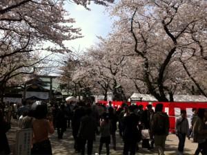 靖国神社 境内 桜